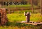kak_stat_uverennim_v_sebe_chelovekom_1